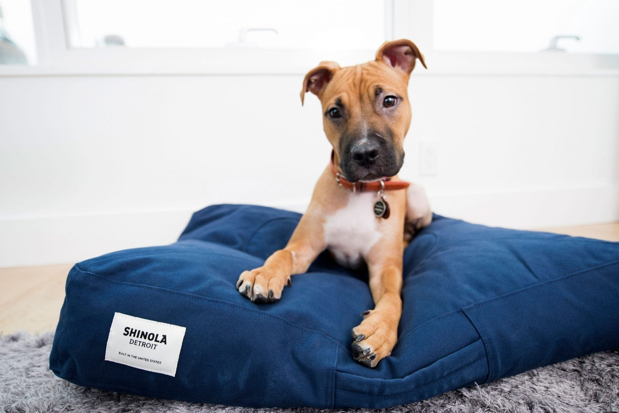 A dog laying on a plush dog bed, inside a guest room at The James Hotel NoMad. The cute dog looks quizzically at the camera.
